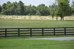 alfalfa cotton grove2